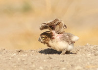 If mom can do it so can I....